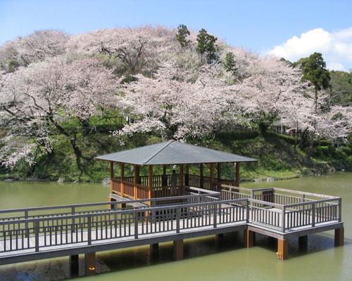 静岡市清水区 清水、船越堤公園 花見