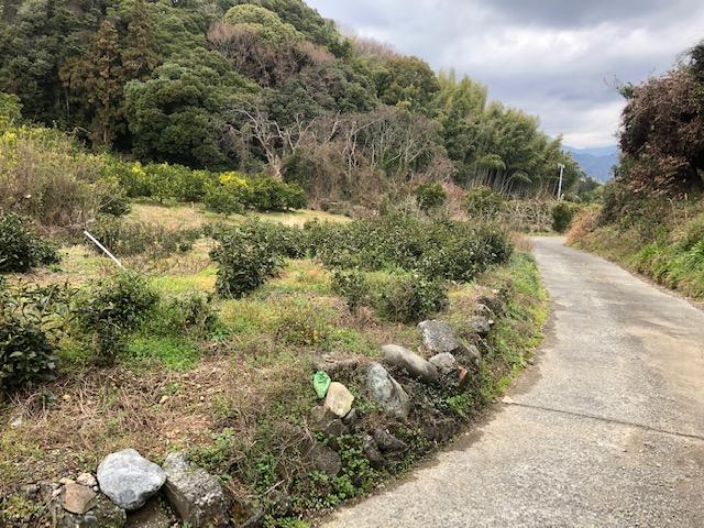 コロナ対策 日本平 山と海 ストレス