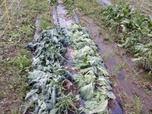 野菜 台風 被害 三和建設