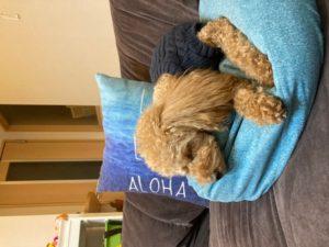 犬はよく寝る生き物 寝過ぎ 犬の睡眠時間は12〜15時間 レム睡眠