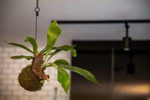 観葉植物 インテリア お部屋づくり 植物 暮らし