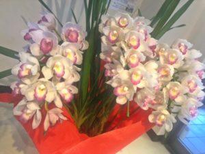 お花 植物 ペルペチュエル 植物のある暮らし