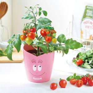 野菜栽培キット 家庭菜園 植物のある暮らし バーバパパ プランター