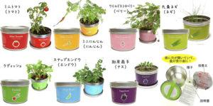 野菜栽培キット インテリア 植物のある暮らし 家庭菜園 初心者